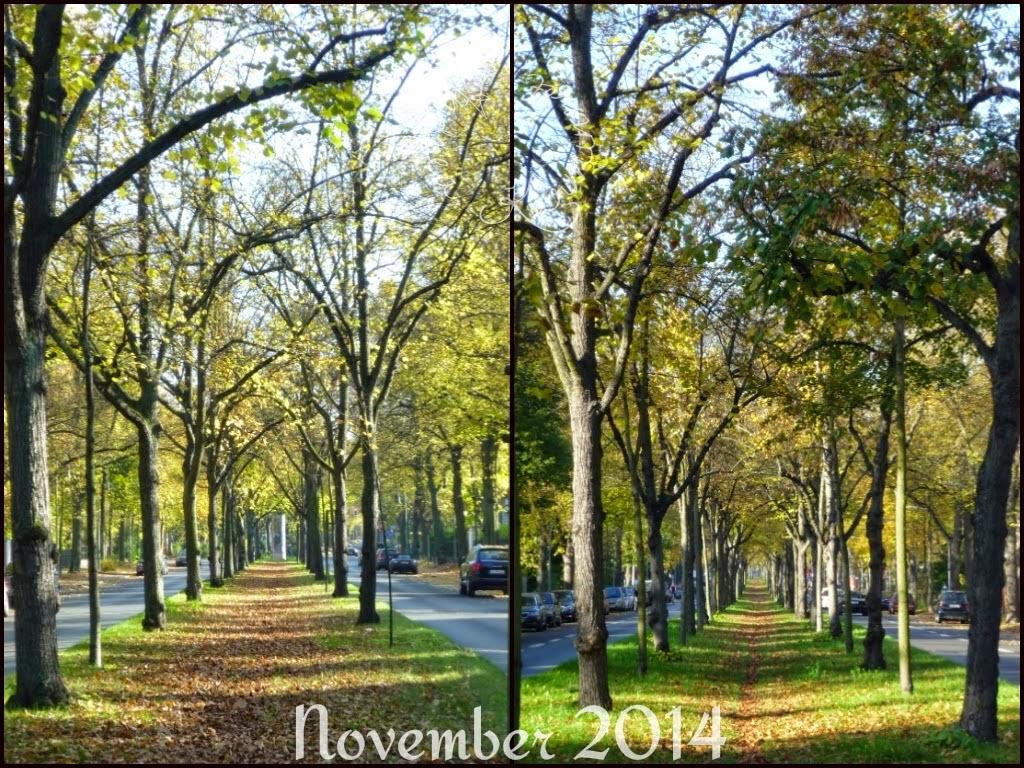 Der 12tel Blick im November
