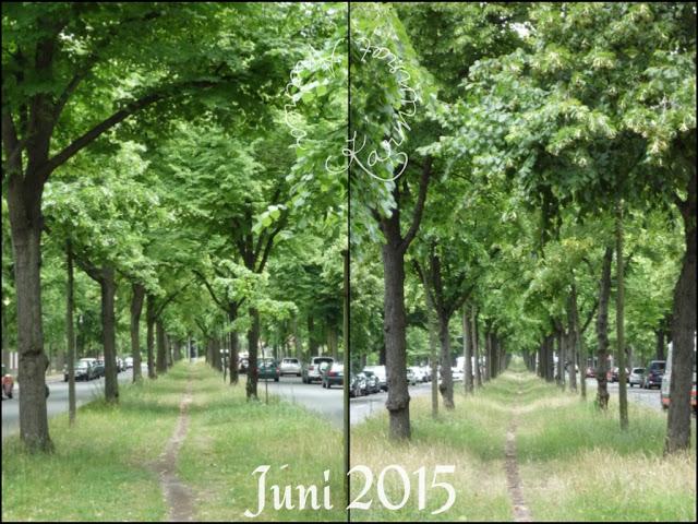 12tel Blick vom Juni