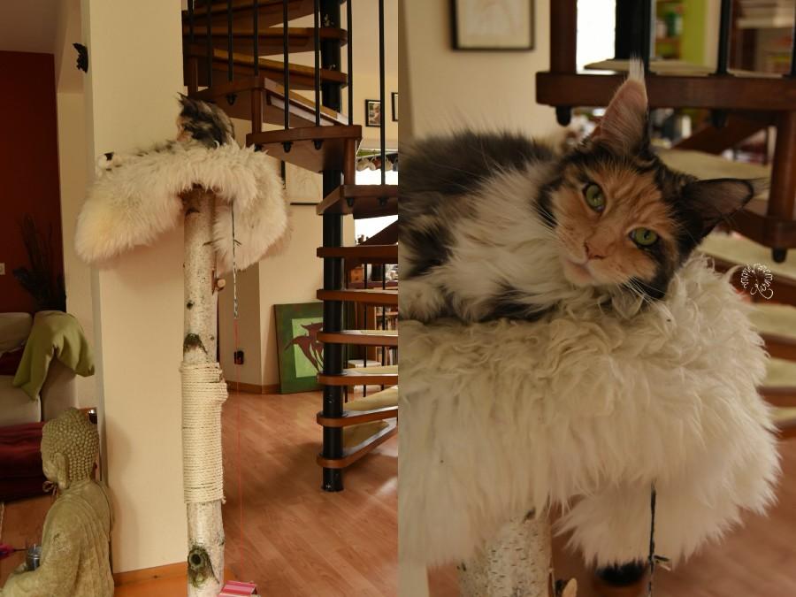 Katze im Hause Karminrot