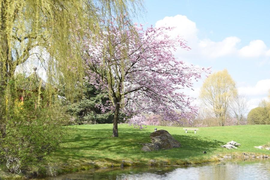 Frühlingswiesen oder die Welt ist bunt