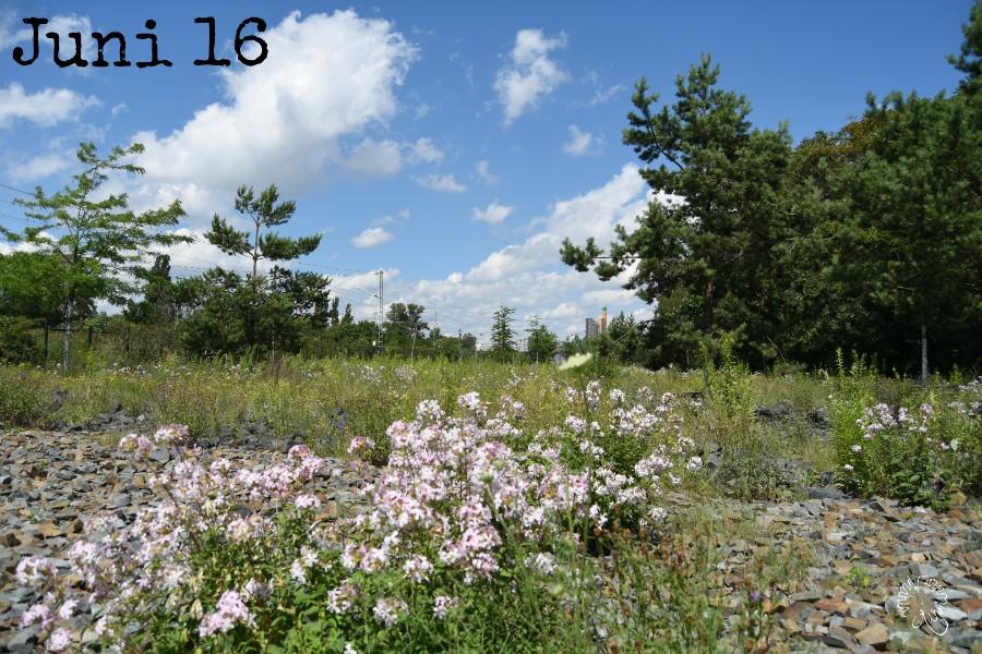 Der 12tel Blick im Juni