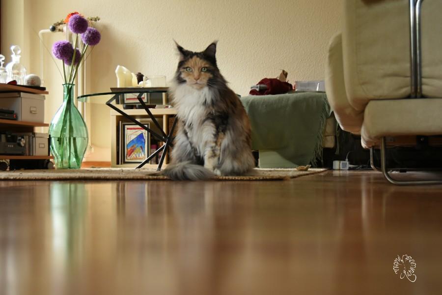 Mäuseperspektive …Achtung Katze