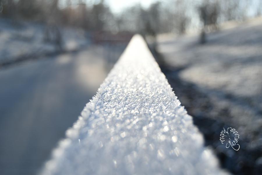 Eiskalter Ausflug