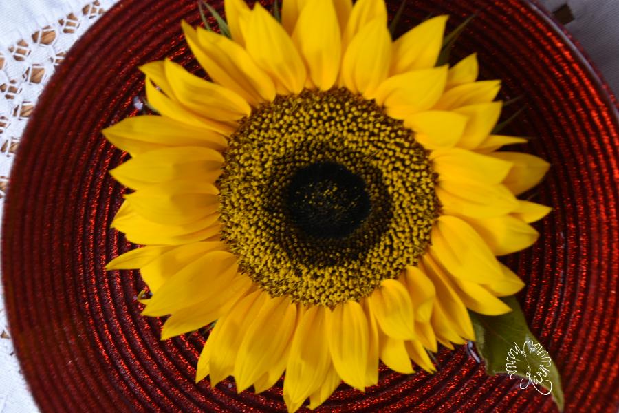 Sonnenblume in Rot