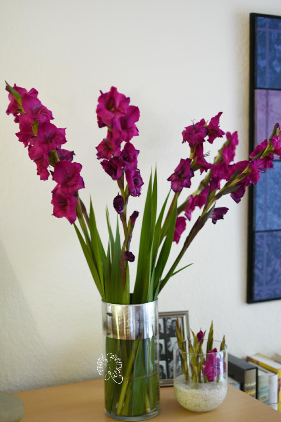 Violette Gladiolen