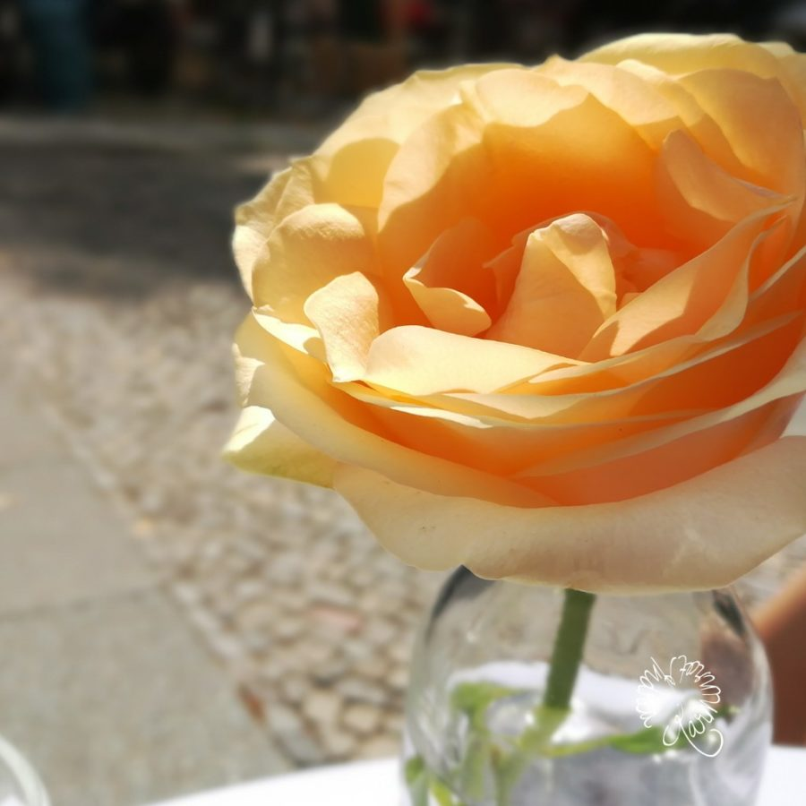 Rose in einer Glasvase
