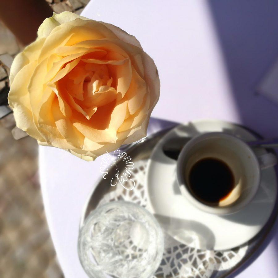Rose im Café