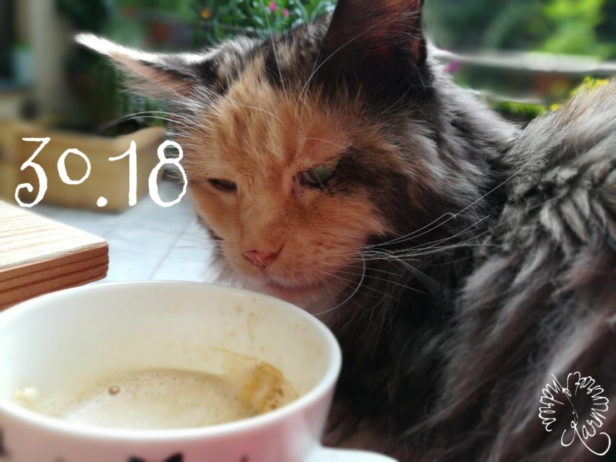 Katze mit heißem Kaffee