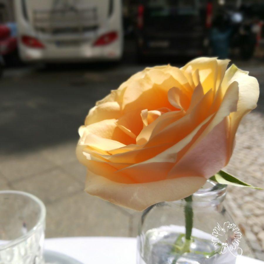 zart gelbe Rose in einer Glasvase im Café