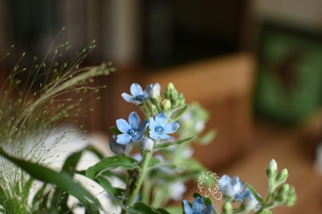 Enzianblümchen