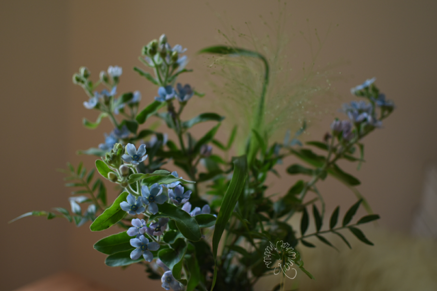 Seidenpflanzengewächs