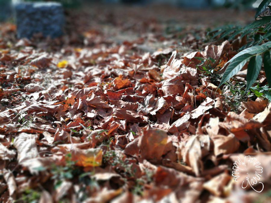 Herbstblätter im September auf der Straße