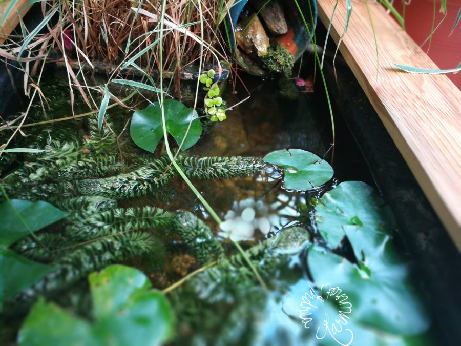 Teich auf der Terrasse