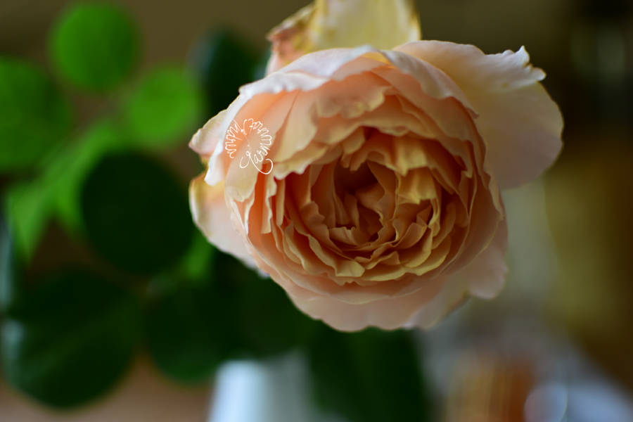 Endlich mal wieder eine Freitagsblume